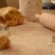 Ricetta biscotti CDS (1)