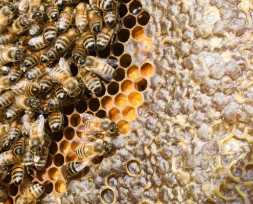 Gioele - Miele e api-Api CasaDelSole - 2015 (20)