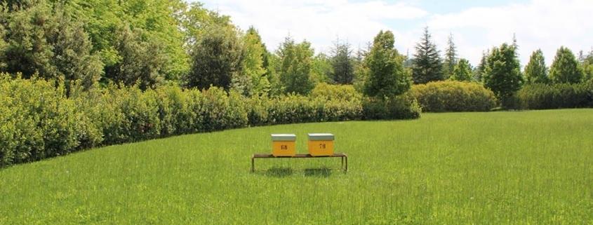 Coronavirus, gli apicoltori possono andare nei propri apiari?