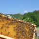 bando apicoltura emilia romagna